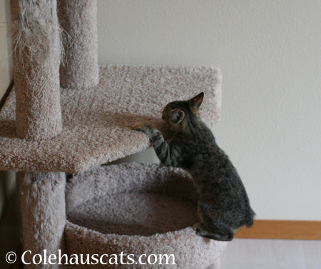 Watch what I can do - 2014 © Colehaus Cats