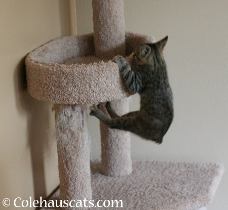 I pull myself up here... - 2014 © Colehaus Cats