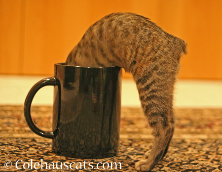 """""""There's no treats in here!"""" - 2014 © Colehaus Cats"""
