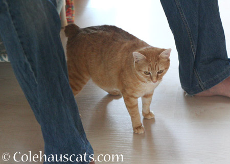 Zuzu sticks with dad - 2014 © Colehaus Cats