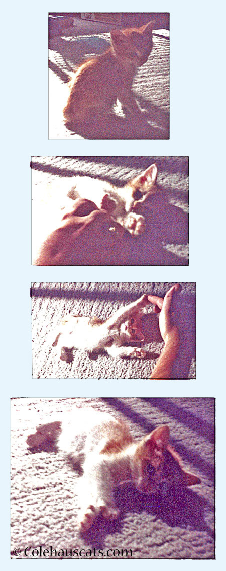 Fuzzy photos of Bob 1989 - 2014 © Colehaus Cats