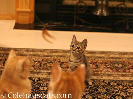 We're watching the Kittycada Neko Fly - 2014 © Colehaus Cats