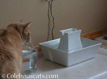 A new fountain - 2014 © Colehaus Cats
