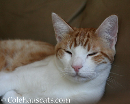 Now it's naptime - 2014 © Colehaus Cats