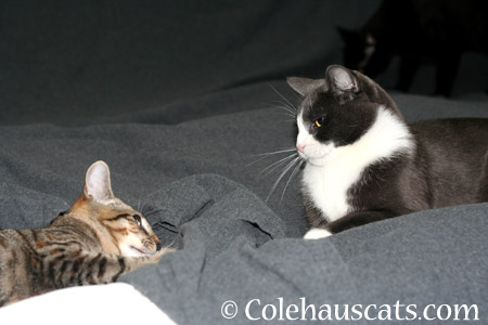 Asking for advice - 2014 © Colehaus Cats