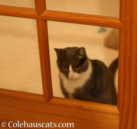 Tessa. Still grounded. - 2014 © Colehaus Cats