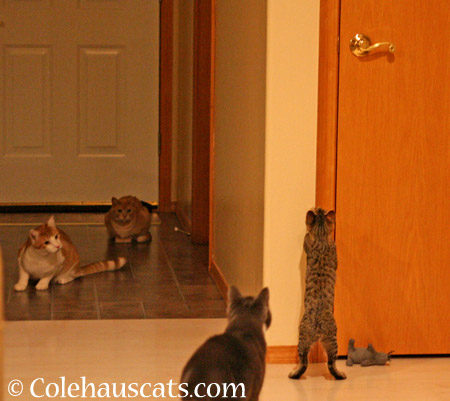 It's Multi-cat Monday! - 2014 © Colehaus Cats