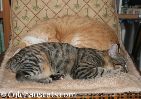 One day I was napping with my mom - 2014 © Colehaus Cats