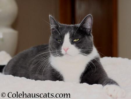 Tessa knows. - 2014 © Colehaus Cats
