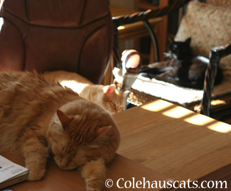 Pia, Zuzu and Olivia soaking up the sun - 2014 © Colehaus Cats