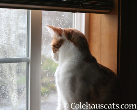 Looking for Spring - 2014 © Colehaus Cats