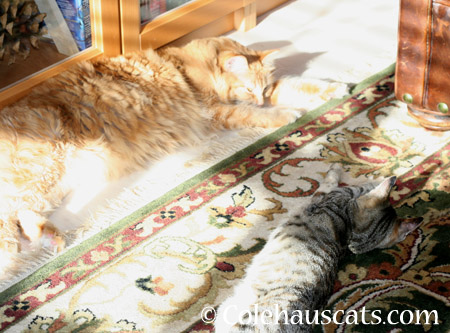Pia and Viola's sun - 2014 © Colehaus Cats