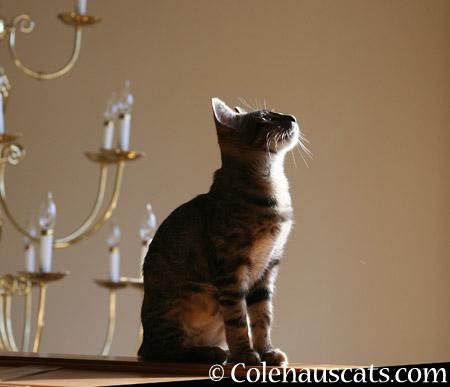 Big Girl Dreams - 2014 © Colehaus Cats