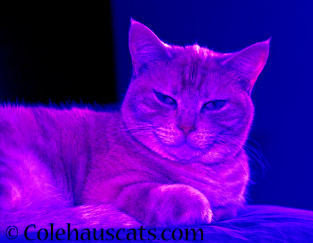 Too overprocessed - 2014 © Colehaus Cats