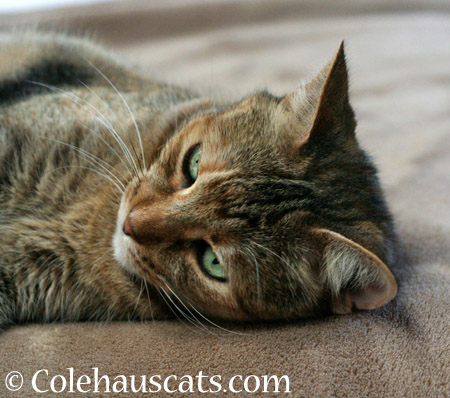 Ruby's Tabby Forehead - 2014 © Colehaus Cats