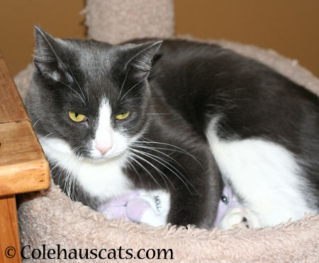 Tessa loves her Molly - - 2014 © Colehaus Cats