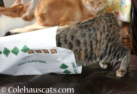 Viola inspects Zuzu's envelope - 2014 © Colehaus Cats
