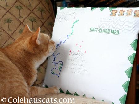 Mama Zuzu receives gift - 2014 © Colehaus Cats