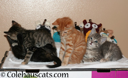 Niblet group photo outtake, November 2013 - 2014 © Colehaus Cats