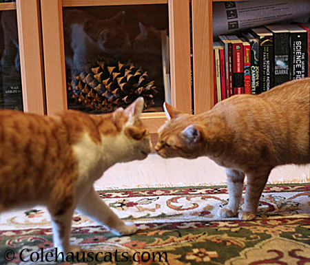Quint and Zuzu, part of the Ginger crew - 2014 © Colehaus Cats