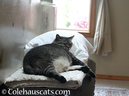 Maxx prefers to sprawl - 2014 © Colehaus Cats