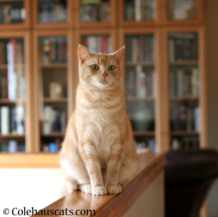 Miss Newton on watch - 2014 © Colehaus Cats