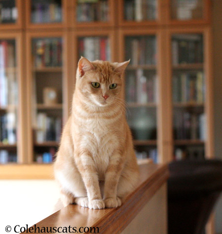 Miss Newton sees all - 2014 © Colehaus Cats