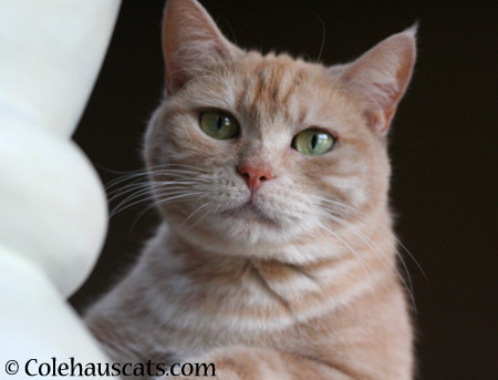 Miss Newton keeps her eyes on you - 2014 © Colehaus Cats