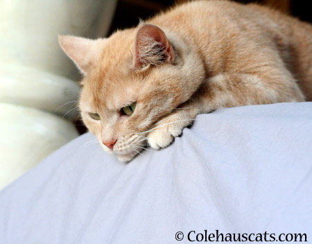 Wanting mom to come home - 2014 © Colehaus Cats
