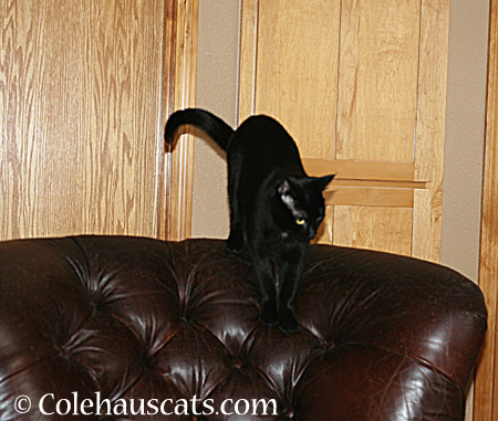Olivia watches here - 2014 © Colehaus Cats