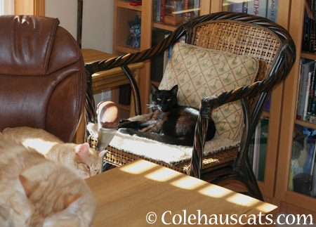 Olivia watches from up here - 2014 © Colehaus Cats