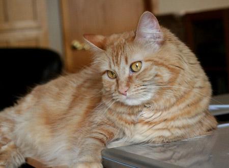 *sigh* - 2014 © Colehaus Cats
