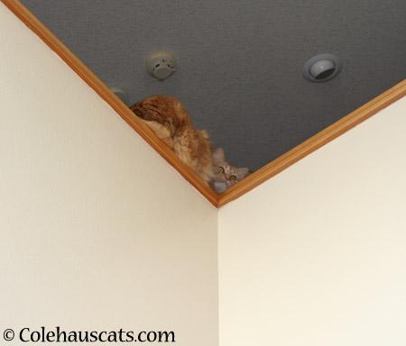 Pia's spot - 2014 © Colehaus Cats