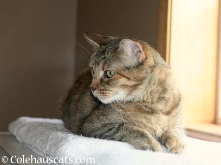 Ruby - 2014 © Colehaus Cats