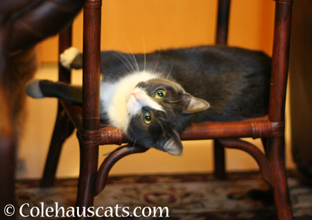 Who you calling a Goof? - 2014 © Colehaus Cats