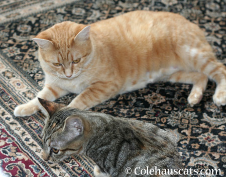 That wasn't so bad now was it? - 2014 © Colehaus Cats