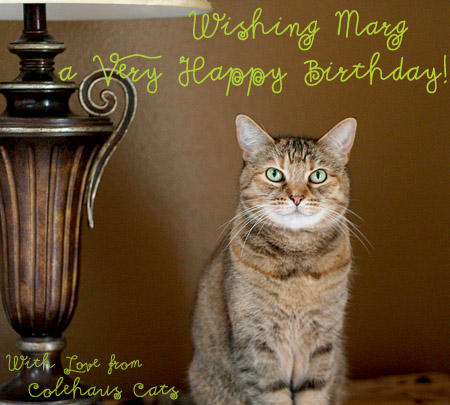 Ruby sends birthday smiles - 2014 © Colehaus Cats