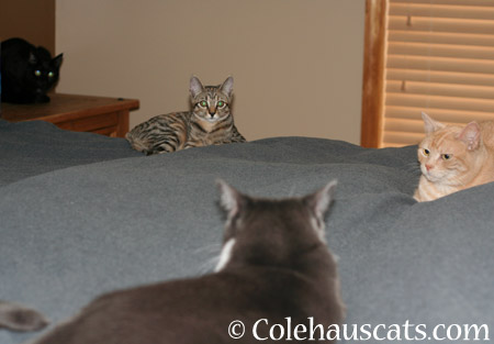 Someone's learning! - 2014 © Colehaus Cats