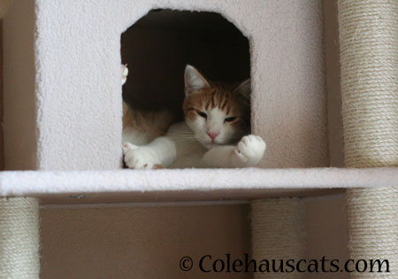 Quint's Cozy Cubby - 2014 © Colehaus Cats