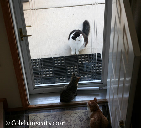 Hey Look! We have a visitor! - 2014 © Colehaus Cats