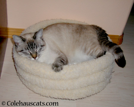 Comfortable at last - 2003-2014 © Colehaus Cats