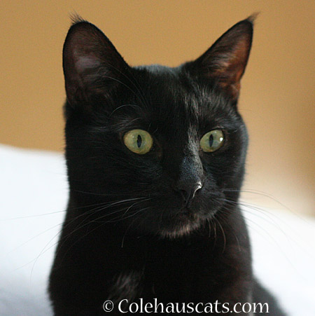 Olivia tells all - 2014 © Colehaus Cats