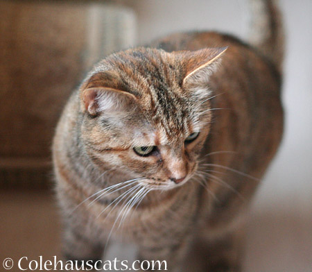Displaced Ruby - 2014 © Colehaus Cats