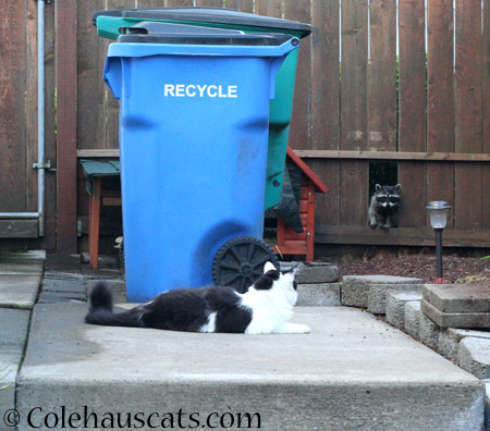 Mo and Trouble get along fine - 2014 © Colehaus Cats