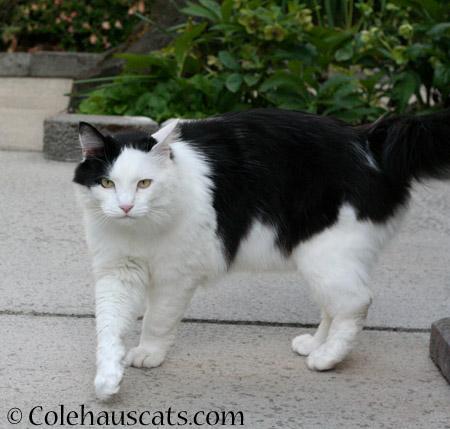 Momo looking good - 2014 © Colehaus Cats
