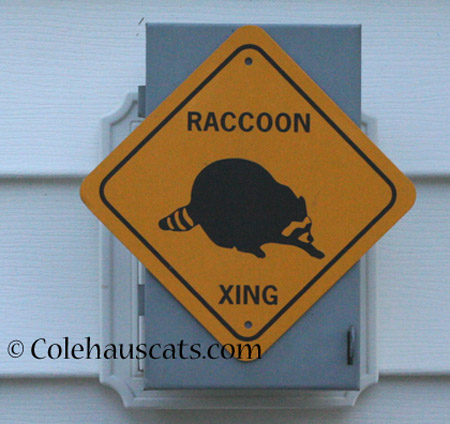 Colehaus is a Raccoon Crossing - 2014 © Colehaus Cats