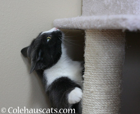 Your tower needs a good sniffing - 2014 © Colehaus Cats