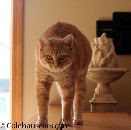 Zuzu's Shape  - 2014 © Colehaus Cats