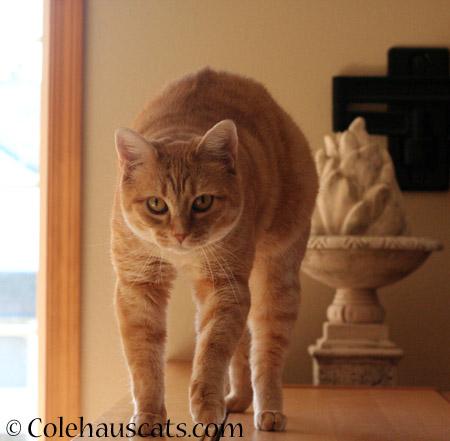 A bit round  - 2014 © Colehaus Cats
