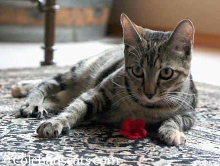 Oopsie! - 2014 © Colehaus Cats